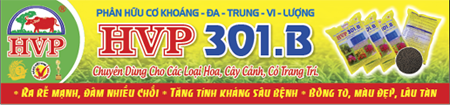 quang cáo header